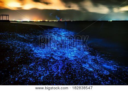 Bio luminescence. Illumination of plankton at Maldives. Many bright particles at the beach.