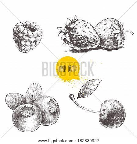 Hand drawn sketch style berries set isolated on white background. Raspberry strawberry cherry and blueberry. Healthy fruit and berry vector illustration.