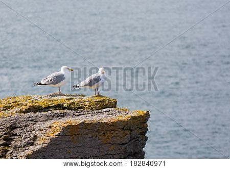 Two seagulls perched on a rock looking out to sea