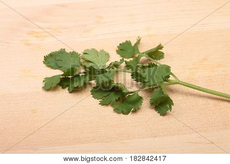 coriander or cilantro isolated on wooden background