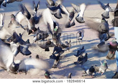 a crowd of pigeons fly off in search of food abstract