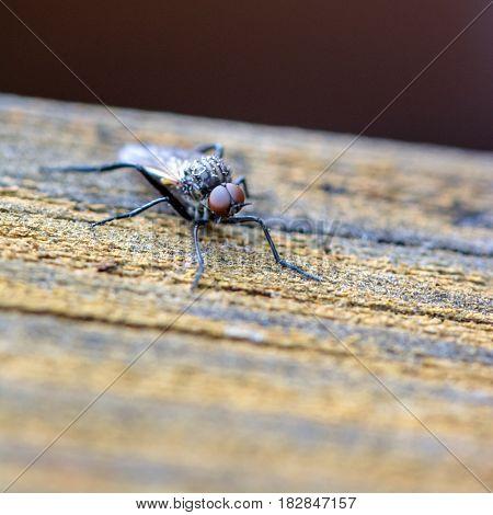 Springtime. Macro shot of a fly .