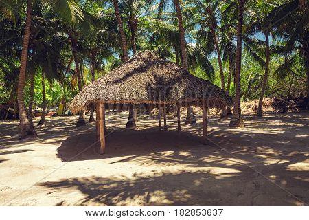 Sandy Beach And Coconut Palm Trees, Punta Cana.