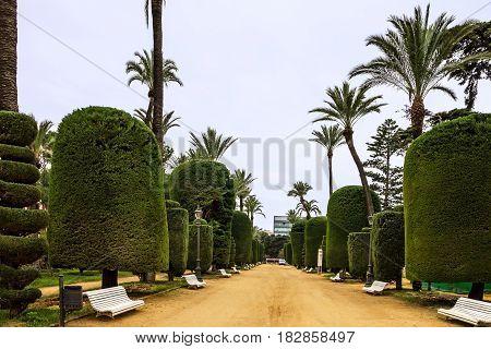 Cadiz town in Spain. Genovese green park