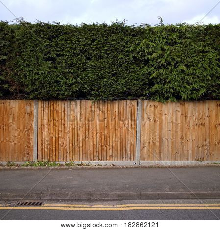 New installation of overlapping wooden fencing on the border of a property with a neatly trimmed hedge above