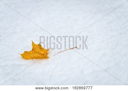 Abstract photography. Yellow maple leaf in white snow.