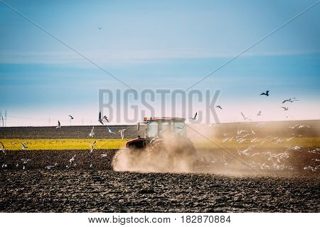 Flock Of Birds Of Seagull Flies Behind Tractor Plowing Field In Spring. Beginning Of Agricultural Season.