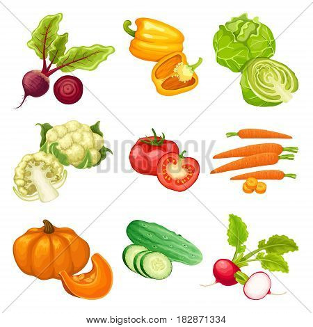 Cartoon organic vegetables set with beet pepper cabbage cauliflower tomato carrot pumpkin cucumber radish isolated vector illustration