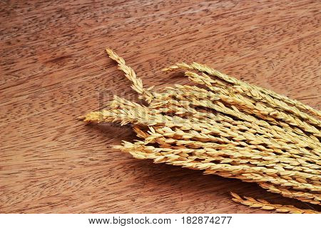 A brown grass bouquet is placed on a brown background