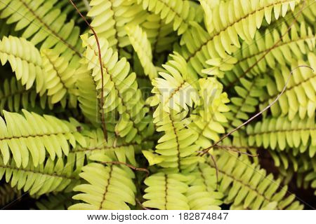 Ferns planted in the leafy garden is a green background
