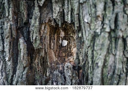 Closed up of selective focus tree with hole