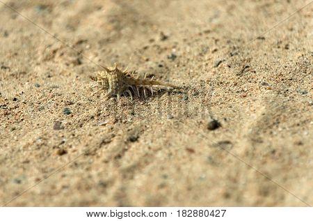 Beautiful Marine Shell On Sand