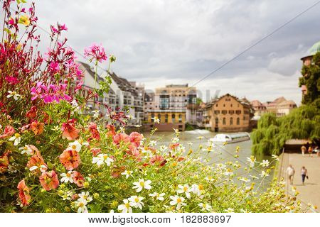 Beautiful summer flowers over europen city view background