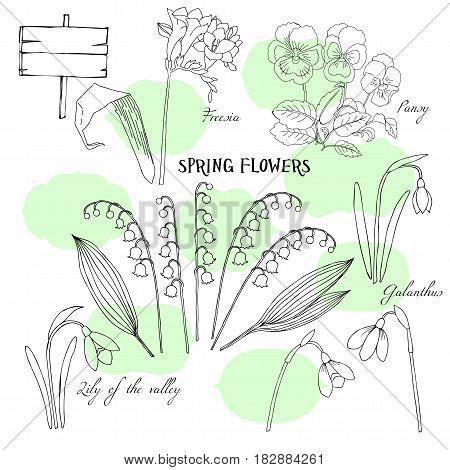 Background with  lily of the valley and pansy. Hand drawn snowdrops flowers sketches. Vector Illustration