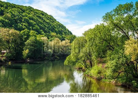 River flows among of a green forest at the foot of the mountain. picturesque nature of rural area in Carpathians. serene summer sunset under blue sky with some clouds