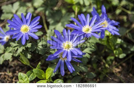 beautiful spring flowers and green leaves in the forest
