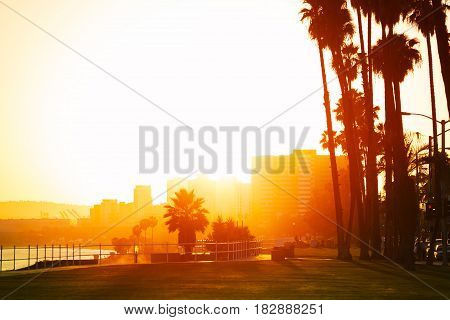 Beautiful sunset over the seafront of Long Beach framed with  silhouettes of palm trees, California