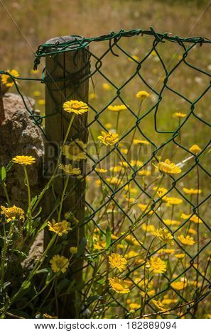 Detail of green wire fence and wooden pole with wild flowers