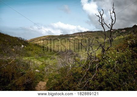 Landscape of hills with wild vegetation, flowers and trees
