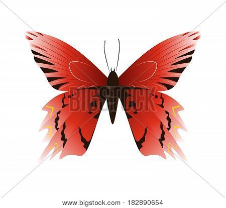 Isolated beautiful butterfly on white background. Red and black colors.
