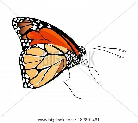 Isolated beautiful butterfly on white background. Red and brown colors. Side view.