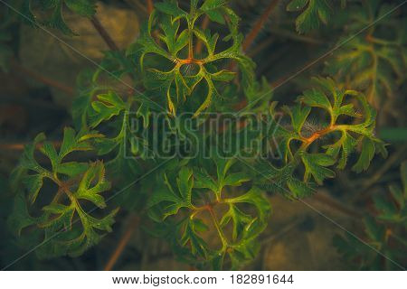 mystical and fantasy forest plant green leaf texture