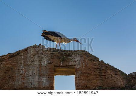 Storks Nesting In Chellah Sanctuary In Rabat, Morocco