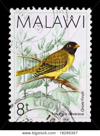 Malawi - Circa 1987: An 8-tambala Stamp Printed In Malawi Shows The Oriole Finch, Linurgus Olivaceou
