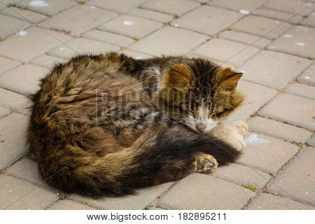 Cat Sleeping On A Courtyard In Medina El Jadida, Morocco