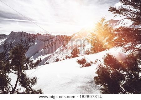 Pine forest in Alps and sunbeam shining from mountains covered with snow. Backlit. Copyspace