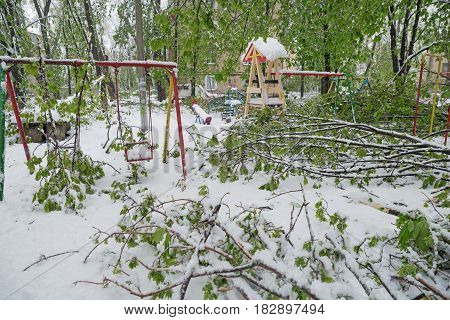 The Branches Of The Tree With The Green Spring Leaves Broke Under The Weight Of Wet Snow And Wind, I