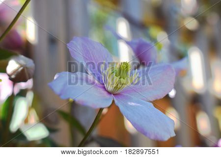 A beautiful sprung flower, absorbing the sun light, showing off its beautiful colours.