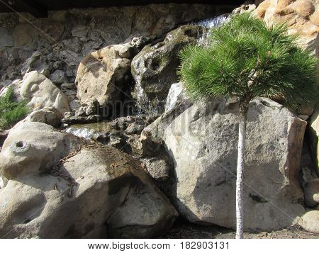 Brook among the stones and a small pine