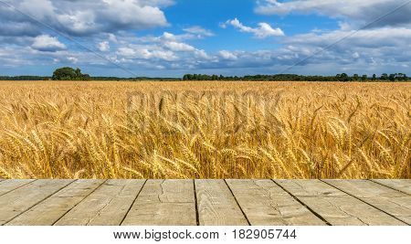 Field with ripening wheat. Photo was taken in one of the ecologically cleanest regions of Europe