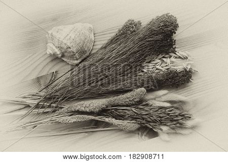beautiful dried flowers, plants and herbs, sea shell, retro style. Vintage composition with dry plant and sea elements on a wooden background