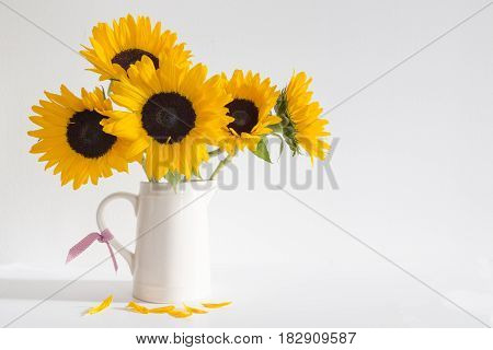 Yellow Sunflowers in a cream jug woth a white background