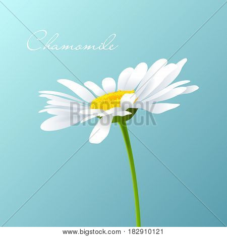 Beautiful background with single white camomile. Vector.