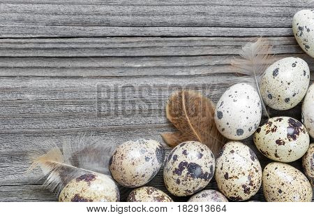 Spotted quail eggs and feathers arranged in a form of the frame on the background of old wooden boards with copy-space