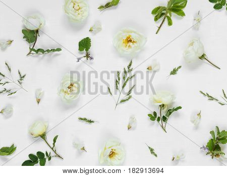Natural background: light green leaves and white wild rose flowers on white background; top view; flat lay