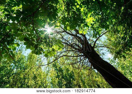 new spring leaf in morning forest