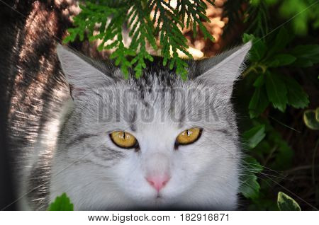 A cat looking at camera in the garden.