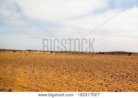 Sahara Desert, Sand And Different Plants