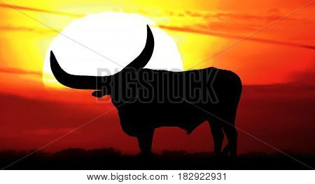 silhouette sunset with Texas longhorn bull in front