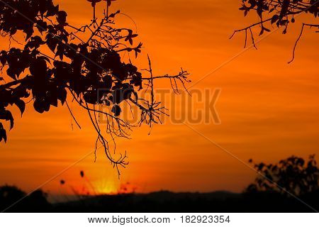 silhouette tree and sunset beautiful colorful landscape in sky twilight time