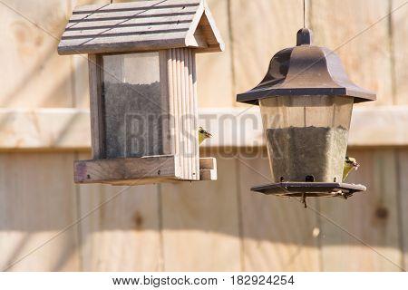 wild gold finches feeding at a feeder