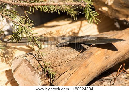 steel hunting knife surrounded by wood and saplings natural setting.
