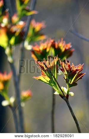Vibrant and colorful shrub sprouts leaves in the forest with sunlit bokeh background.