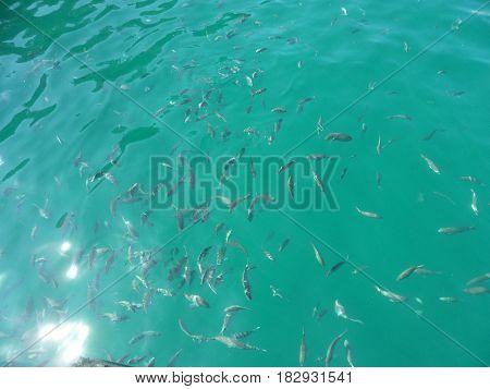 Peixes na Lagoa Azul,da Ilha Grande, em Angra dos Reis, RJ