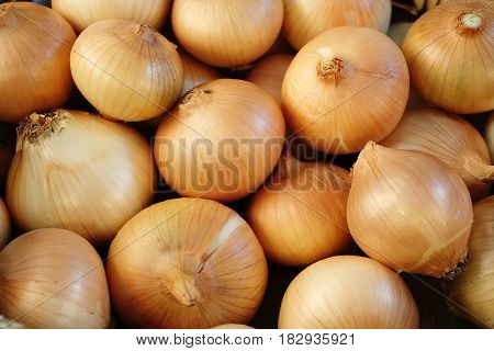 Fresh onions. Onions background. Ripe onions on market