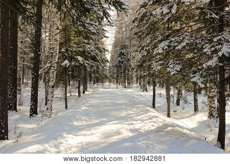 Snowy winter walkway and trees in Park